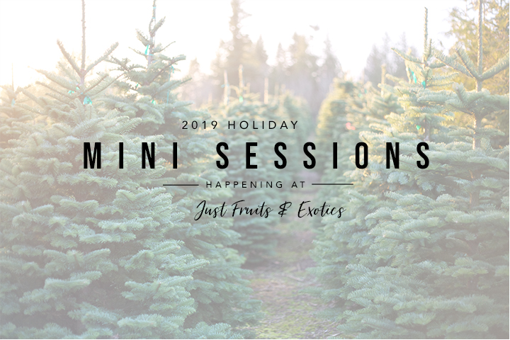 Holiday Mini Sessions in Tallahassee and Crawfordville Florida