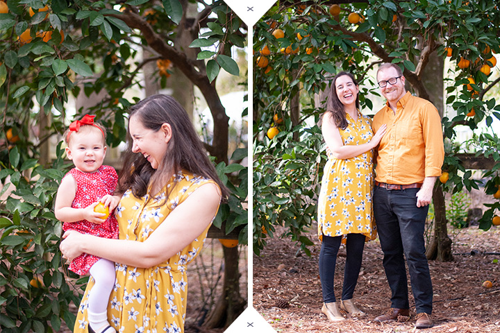 Holiday Mini Session Family Portraits in an Orange Grove