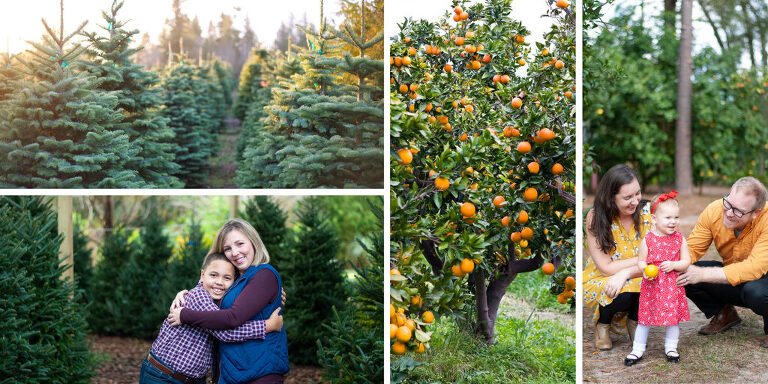 Orange grove holiday sessions